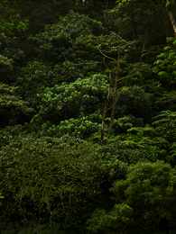 Taiwan Forest